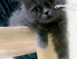 lovely kitten female